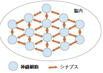 ニューラルネットワーク 神経細胞 モデル シナプス